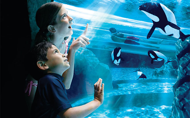 Get an up close look at the beautiful Commersons dolphins at Aquatica.